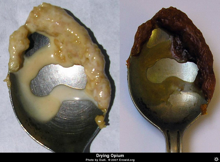 Erowid Chemicals Vaults : Images : opium fresh _i2005e0111_disp