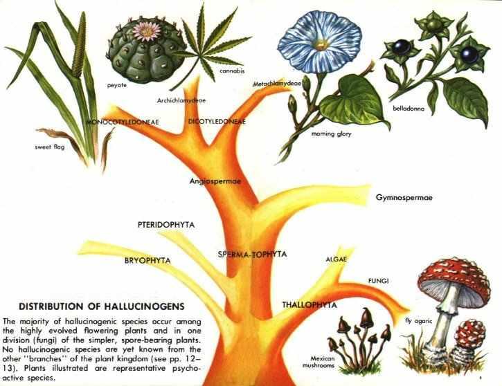 Erowid Online Books Golden Guide Hallucinogenic Plants Pg 11 20