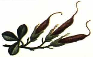 Erowid Online Books Golden Guide Hallucinogenic Plants Pg 151 160