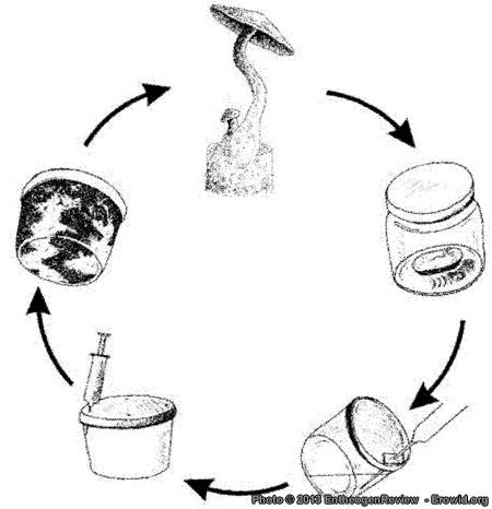 Erowid Mushrooms Vaults : Mushroom Cultivation: From Falconer to