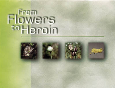 Erowid poppy vault from flowers to heroin mightylinksfo Image collections